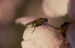 Macro shot about a fly